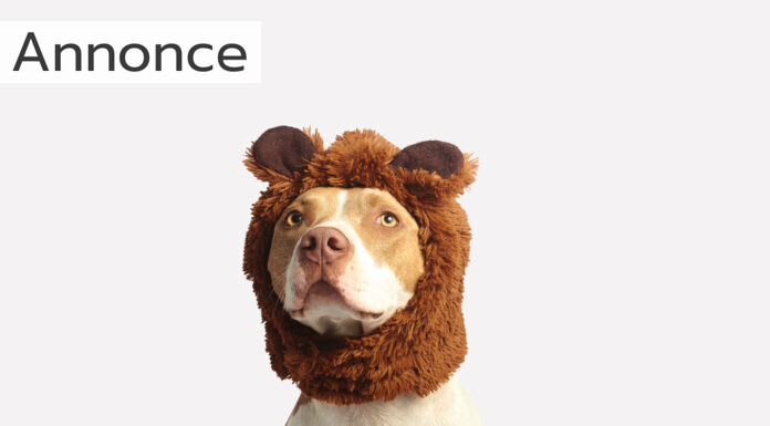 hundehaldbånd